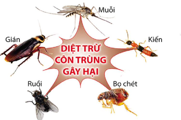 diet con trung feature
